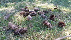 Käpylehmät taiteiltiin kahlaamaan nurmikkoon.